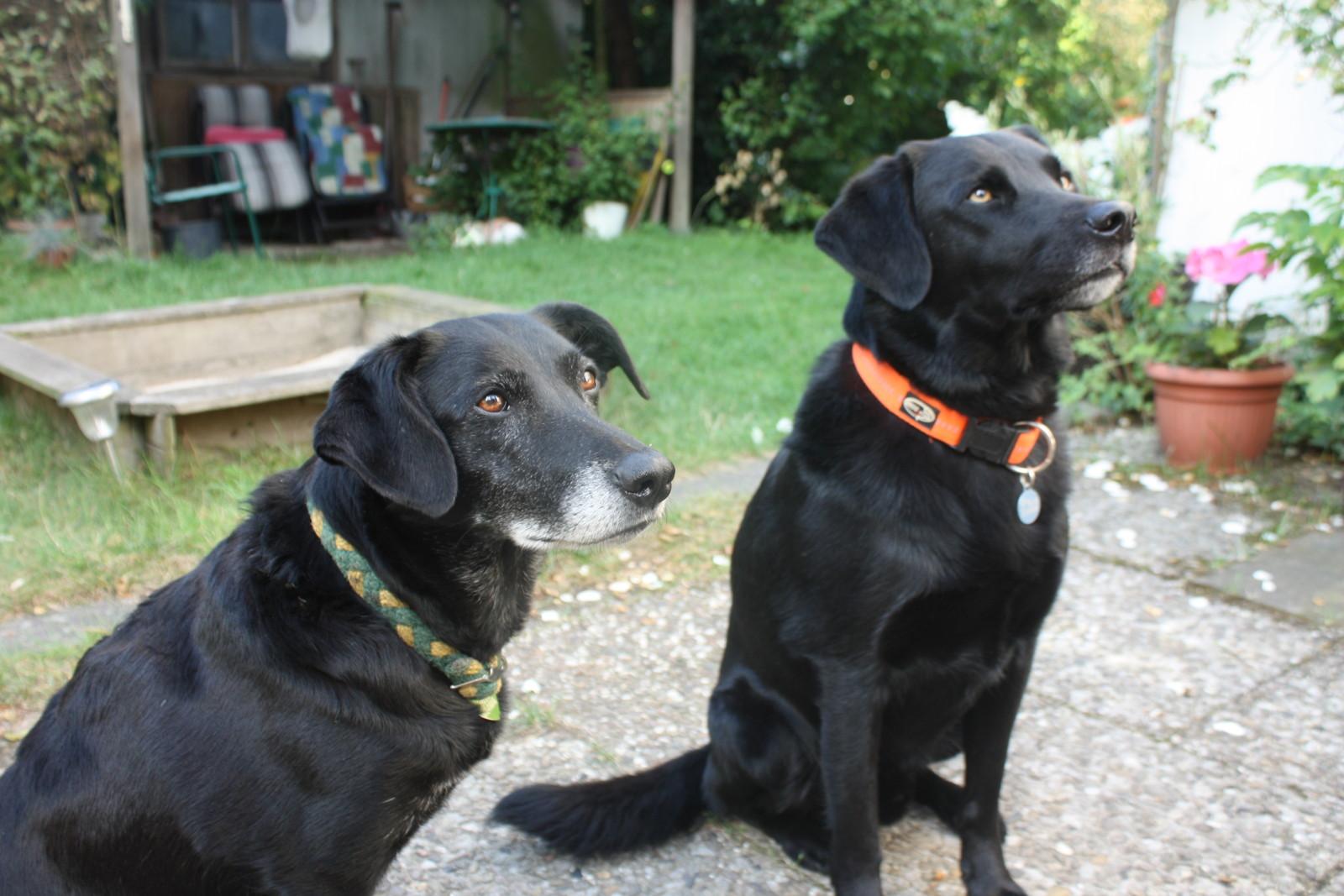 Emmi & Pico